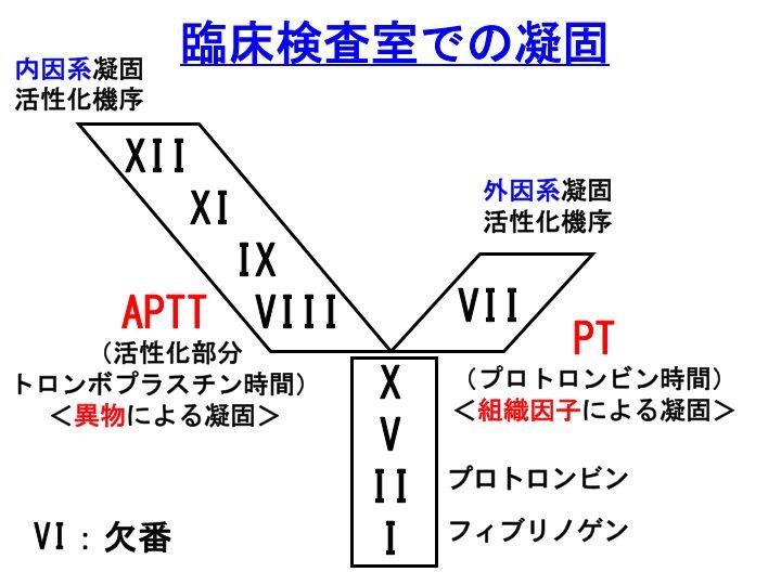 血液凝固検査13